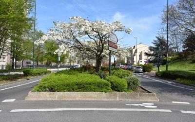 Avenue des Frances