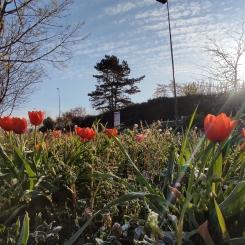 fleurs avenue frances