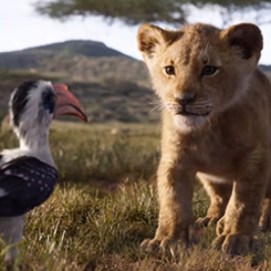 le_roi_lion_4.jpg