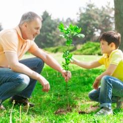 plantun_arbre_vignette.jpg