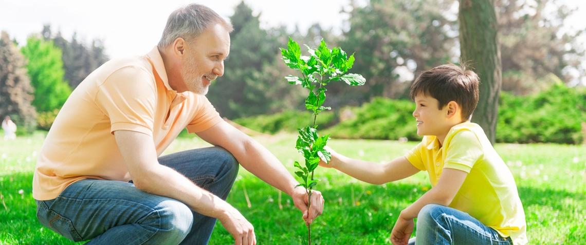 plantun_arbre.jpg